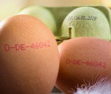 printer telur